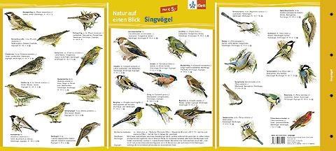 Natur auf einen Blick, Singvögel, farbig