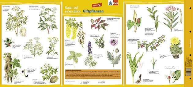 Natur auf einen Blick, Giftpflanzen, farbig