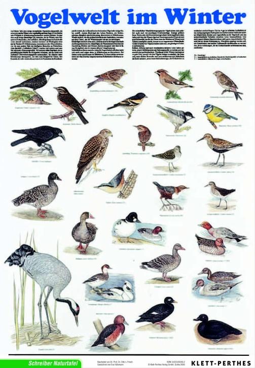 Lehrtafel Vogelwelt im Winter, als Poster