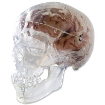 Klassik-Schädel, transparent, 3-teilig