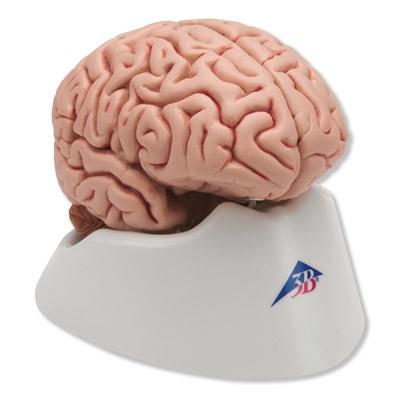 Klassik-Gehirn, 5-teilig