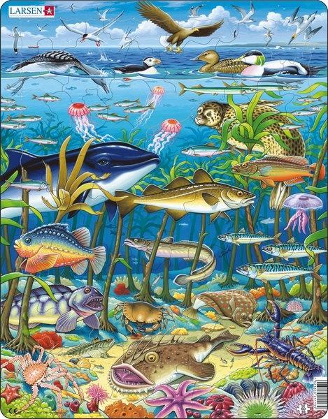 Puzzle - Meeresleben, Format 36,5x28,5 cm, Teile 60