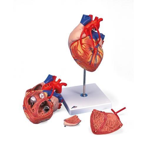 Herz mit Bypass, 2-fache Größe, 4-teilig