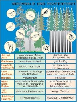Transparentsatz Mischwald und Fichtenforst