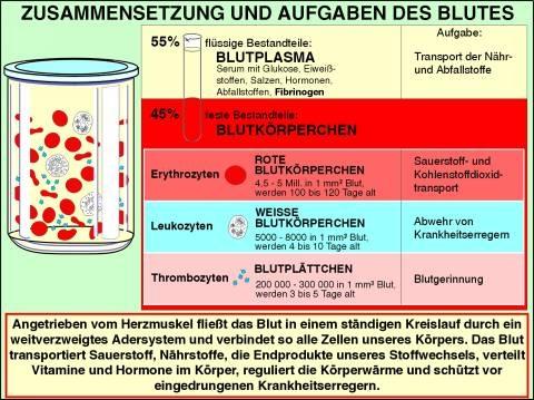 Interaktive digitale Tafelbilder auf CD, Blut,- Bestandteile und Aufgaben