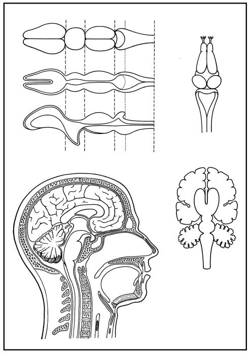 lehrmittel skizzenbl tter biologie des menschen teil 3 sinnesorgane m3blie. Black Bedroom Furniture Sets. Home Design Ideas