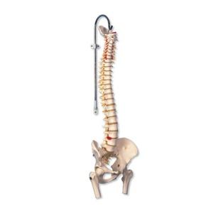 Flexible Wirbelsäule für starke Beanspruchung, mit Oberschenkelansatz