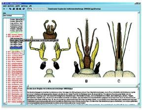 CD-ROM Die Welt der Insekten. Neuerscheinung,Neue erweiterte Aus