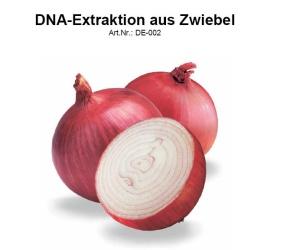 DNA-Extraktion aus der Zwiebel, 15 Versuche, Versuchsdauer 45 mi